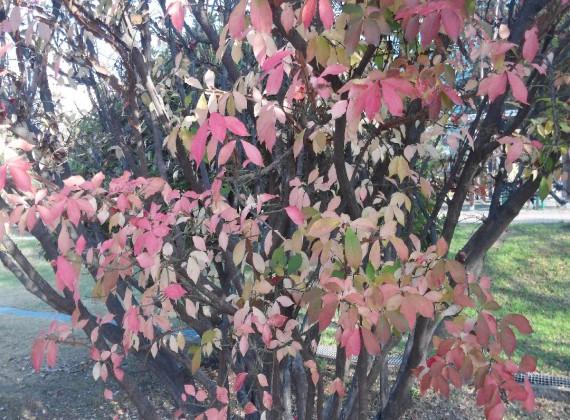 화살나무.jpg